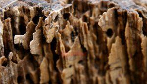 kayu-kropos